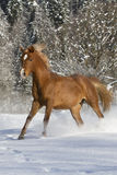 Araber im Schnee Images stock
