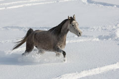Araber im Schnee Lizenzfreies Stockbild