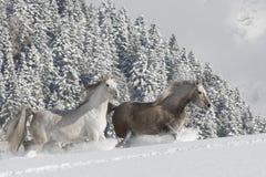 Araber im Schnee Stockbilder
