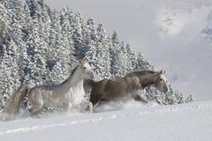 Araber im Schnee Στοκ Εικόνα