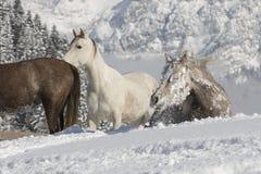 Araber im Schnee Immagini Stock Libere da Diritti
