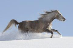Araber im Schnee Stock Image