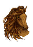 Arabian brown horse portrait Royalty Free Stock Photo