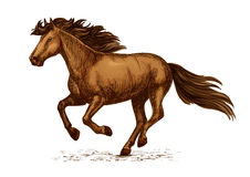 Arabian brown horse running on races vector sketch Royalty Free Stock Image