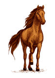 Arabian brown horse stomping hoof vector sketch. Horse vector sketch. Arabian mustang standing on ground and stomping or stamping with hoof. Brown wild or farm Stock Photos