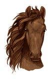 Arabian brown stallion vector portrait Royalty Free Stock Photo
