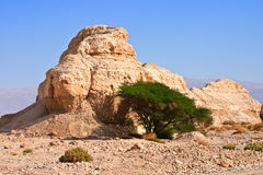 Arabian desert Stock Image
