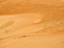 Arabian Desert Detail Stock Images