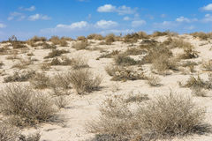 Arabian desert in the scorching midday Royalty Free Stock Image