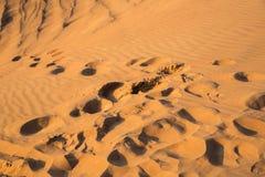 Arabian desert Royalty Free Stock Photos