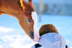 Arabian foal sniffing cap of kid in winter Royalty Free Stock Photo