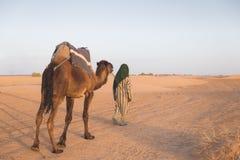 The arabian guide lead camel in Sahara desert Stock Images