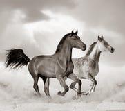 Arabian horse in desert. Beautiful arabian horse in desert running. Toned image royalty free stock photos
