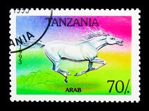 Arabian Horse (Equus ferus caballus), Horses serie, circa 1993. MOSCOW, RUSSIA - MARCH 18, 2018: A stamp printed in Tanzania shows Arabian Horse &#x28 Royalty Free Stock Photo