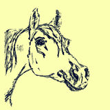 Arabian horse (head). Drawing by hand. Royalty Free Stock Images