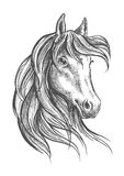 Arabian horse with long forelock, sketch style Royalty Free Stock Photos