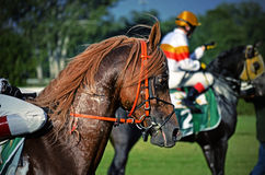 Arabian horse racing sluzewiec warsaw Stock Images