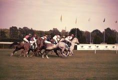 Arabian horse racing sluzewiec warsaw Stock Images