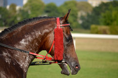 Arabian horse racing sluzewiec warsaw Stock Photos