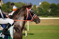 Arabian horse racing Royalty Free Stock Photo