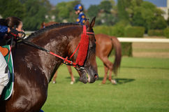 Arabian horse racing Stock Photos
