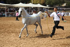 Arabian horse show and championship Royalty Free Stock Photography