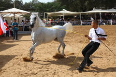 Arabian horse show and championship Royalty Free Stock Images