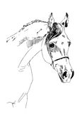 Arabian horse sketch  Stock Images