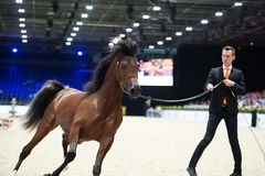 Arabian horse world championship, Nord Villepente in Paris. PARI Royalty Free Stock Images