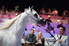 Arabian horse world championship, Nord Villepente in Paris. PARI Royalty Free Stock Photos