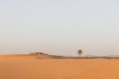 The arabian house with palm tree in Sahara desert Royalty Free Stock Images