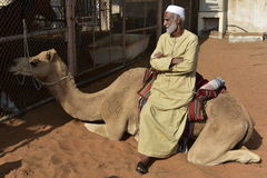 Arabian Man Sitting on his Dromedary Royalty Free Stock Images