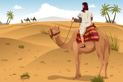 Arabian Riding Camels on the Desert Stock Image