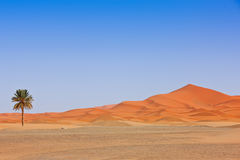 Arabian Sand Dunes and fountain Royalty Free Stock Image