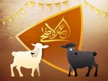 Arabic calligraphic golden text Eid-Ul-Adha, Islamic festival of. Sacrifice with illustration of sheep Stock Photos