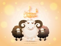 Arabic calligraphy text Eid-Ul-Adha with black and white. Sheep on bokeh background for Muslim community festival of sacrifice Royalty Free Stock Photo
