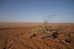 The Arabic Desert Royalty Free Stock Image