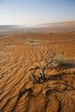 The Arabic Desert Stock Photography