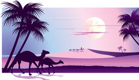 Arabic Dreams. Sunset in desert camels and Africa Royalty Free Stock Images