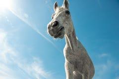 Arabic horse low angle shot Royalty Free Stock Photos