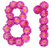 Arabic numeral 81, eighty one, from flowers of chrysanthemum, is. Olated on white background Royalty Free Stock Photography