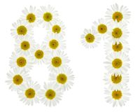 Arabic numeral 81, eighty one, from white flowers of chamomile, Stock Photography