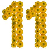 Arabic numeral 11, eleven, rom yellow flowers of buttercup, isol Stock Images
