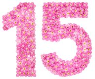 Arabic numeral 15, fifteen, from pink forget-me-not flowers, iso. Lated on white background Royalty Free Stock Image