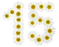 Arabic numeral 15, fifteen, from white flowers of chamomile, iso. Lated on white background Royalty Free Stock Photo