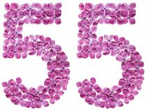 Arabic numeral 55, fifty five, from flowers of lilac, isolated o. N white background royalty free stock image