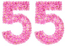 Arabic numeral 55, fifty five, from pink forget-me-not flowers,. Isolated on white background Royalty Free Stock Photography