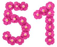 Arabic numeral 51, fifty one, from pink flowers of flax, isolated on white background vector illustration