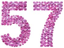Arabic numeral 57, fifty seven, from flowers of lilac, isolated. On white background stock photo