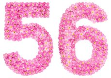 Arabic numeral 56, fifty six, from pink forget-me-not flowers, i. Solated on white background Royalty Free Stock Photo